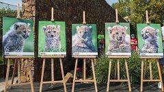 Gepardí paterčata.