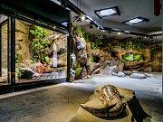 Velemlokárium s velemloky čínskými v pražské zoologické zahradě - denní režim.
