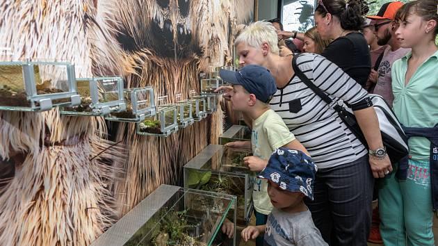 Zoo Praha pro velký zájem veřejnosti vrací do Galerie v Gočárových domech sklípkany.