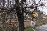 Na Vítkově najdete asi 20 krmítek pro ptáky