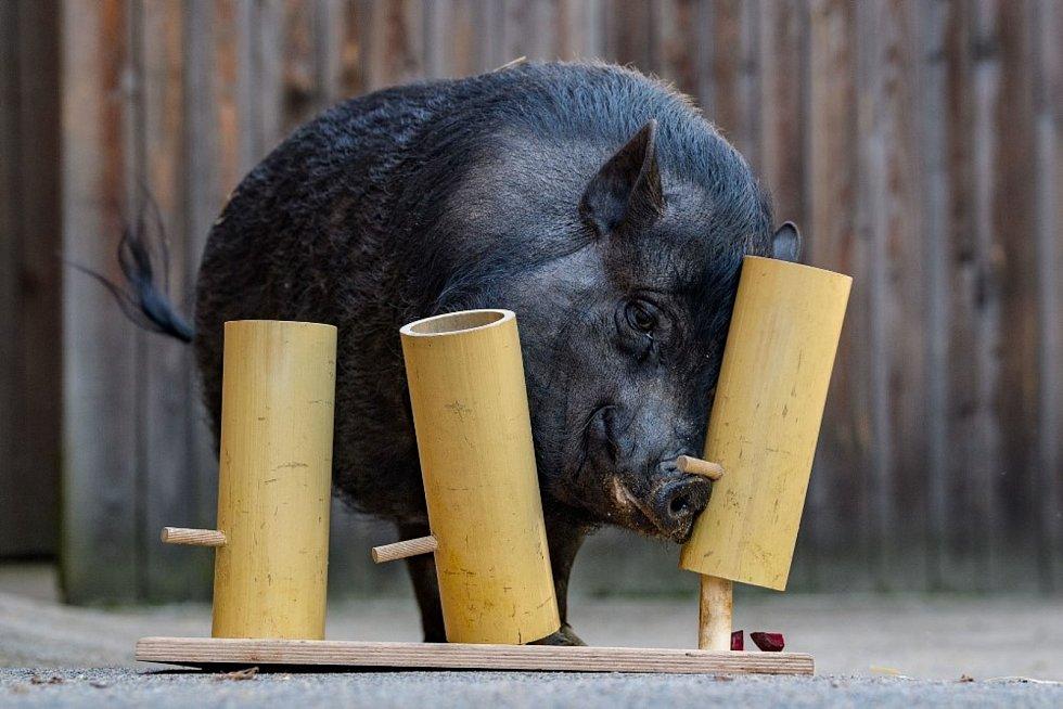 Zvířata řeší i hlavolamy.