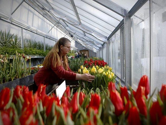 Na Hradě byl zpřístupněn zrekonstruovaný pěstební skleník