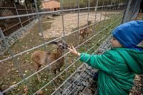 Slavnostní otevření zookoutku Divoká zahrada v pražském Hostivařském lesoparku