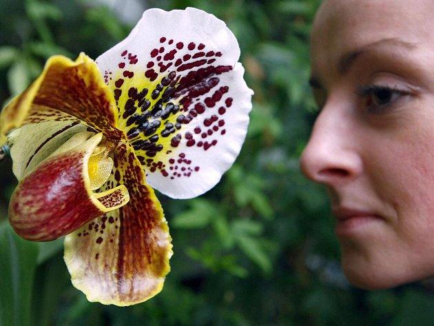 Výstava exotických orchidejí v botanické zahradě v pražské Troji.