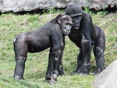 Nuru s bratrem Kiburim zvědavě obhlížejí nové kmeny.