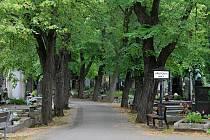 Olšanské hřbitovy s rozlohou téměř 51 hektarů jsou důležitou součástí městské zeleně.