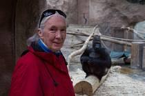 Jane Goodall a populární gorilí samec Richard.