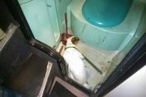 Pes celníků našel cigarety i v záchodě.