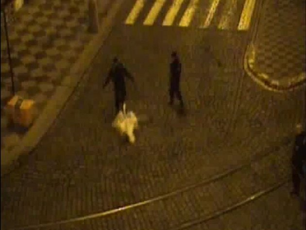 Necelou hodinu po půlnoci byli policisté přivoláni k dopravním komplikacím na Klárově. Nešlo o bouračku, ale o umíněnou labuť.