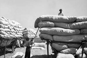 Slamníky pro slet – V roce 1938 se celá republika připravovala na X. všesokolský slet a obyvatelé Kyjí měli na starost přípravy slamníků, na které mohli po těžkém výkonu sportovci ulehnout.