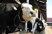 V Agrodružstvu Postoupky zrušili na sklonku roku chov prasat. Nadále se tam však věnují rostlinné výrobě či chovu krav.