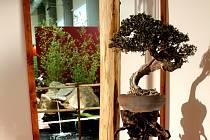 Prodejní výstava Floria Podzim v Kroměříži je letos spjata s expozicí bonsají.