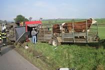 Šest krav i řidič vyvázli z havárky bez zranění. Převrácený náklaďák dostala zpět na kola až přivolaná těžká technika.