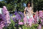Výstava Zahrada Věžky Léto 2018