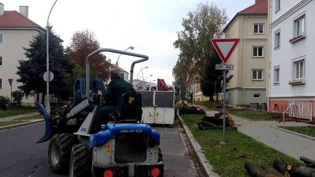 V Kroměříži byla zahájena plánovaná obnova zeleně. Vykácené sakury na ulici Sokolovská budou nahrazeny novými stromy.