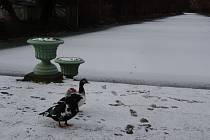 Zima v Podzámecké zahradě v Kroměříži.
