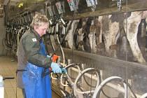 Někteří zemědělci se vydali do Prahy demonstrovat, jiní ale museli zůstat v práci, aby jejich problémy dobytek nepocítil na péči.