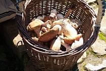 Letošní sezóna přeje houbařům, jde vidět, že lesy u Roštína jsou oblíbeným cílem.