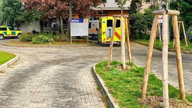 Nová výsadba zeleně v Kroměřížské nemocnici