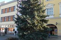 Vánoční strom vztyčili v pondělí 21. listopadu na Velkém náměstí v Kroměříži. Třináct metrů vysoký smrk bude slavnostně rozsvícen ve čtvrtek 24.11.