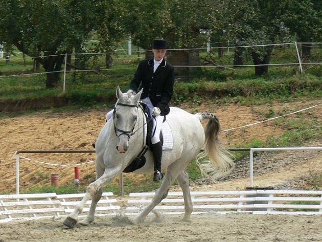 Koně v Těšánkách