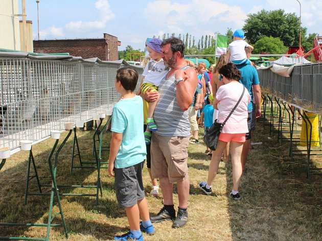 V sobotu 2. června 2018 se v areálu společnosti Navos v Kroměříži-Kotojedech konala Zemědělská výstava Kroměříž 2018.Na snímku je výstava drobného zvířectva.