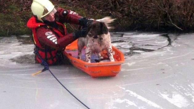 Záchrana psa ze zamrzlého rybníka na Rusavě
