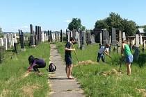 Do Holešova přijelo osm dobrovolníků z celého světa, pomáhat na Týdnu židovské kultury a podílet se na údržbě židovského hřbitova.