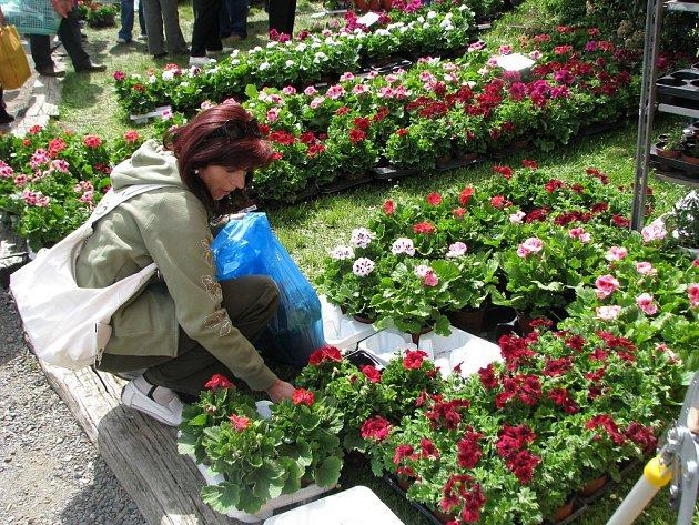 V sobotu 3. května odstartovala ve Věžkách tradiční výstava Floria.
