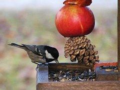 O víkendu lze zajít na vítání ptačího zpěvu, ilustrační foto