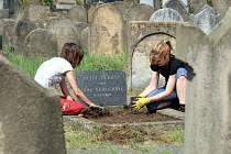 Dobrovolníci při práci na židovském hřbitově v Holešově.