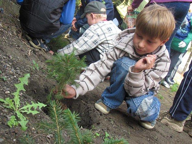 Zdounecká základní škola se ve středu 21. září 2011 připojila k Mezinárodnímu dni míru. Při jeho příležitosti na prvním i druhém stupni vysadili několik smrků ztepilých.