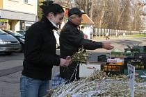 V Kroměříži se v těchto dnech nakupují ve velkém různé vánoční ozdoby, včetně jmelí.