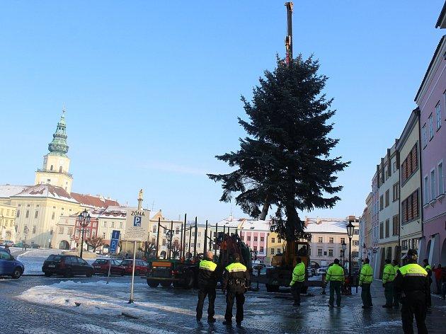 Vánočního stromu se už dočkala i Kroměříž: devítimetrový smrk pichlavý na tamním Velkém náměstí vztyčili v pátek 1. prosince dopoledne.
