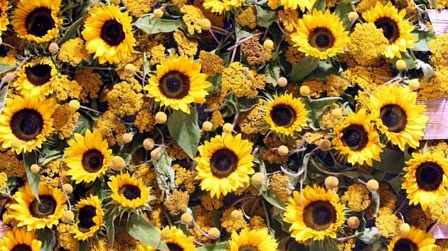 Výstava Floria léto. Ilustrační foto.