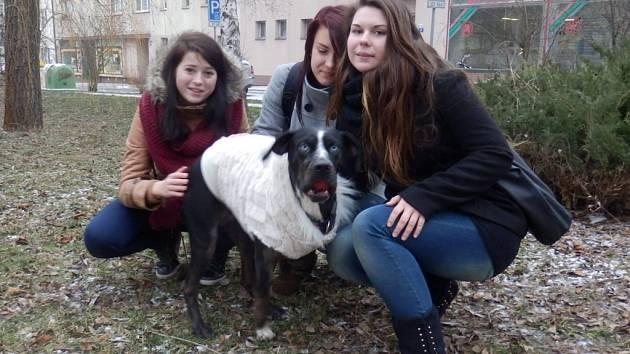 CHTĚJÍ POMOCI. Studentky veterinární školy s fenkou Chiarou, kterou před časem srazilo auto. Projekt studentů veteriny se snaží pro psa najít výrobce protézy.