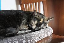 Až na 180 koček ubytovali v útulku s názvem Zatoulané štěstí na okraji Kroměříže.