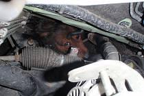 Zaklíněného psa do podvozku auta, museli v Záříčí vyprostit hasiči. Zvíře se podařilo zachránit bez vážnějších zranění.
