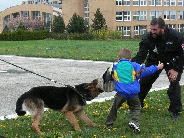 Poslouchat se musí. Do kroměřížské nemocnice zavítala ve čtvrtek městská policie, aby předvedla dětem z ortoptického oddělení své cvičené psy. Tři pejskové před dětmi předvedli třeba štěkání na povel nebo zastavení pachatele.