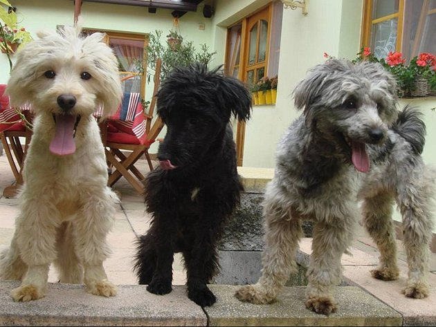 Šestnáct psů z Chvalčova hledá své majitele