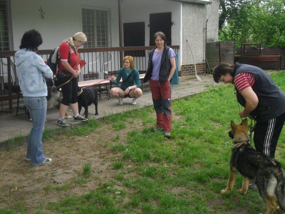 V Chropyni se v sobotu 12. května konal Den boxera – setkání majitelů a chovatelů této psí rasy. Součástí byly zkoušky z nejrůznějších dovedností a další výcvik.