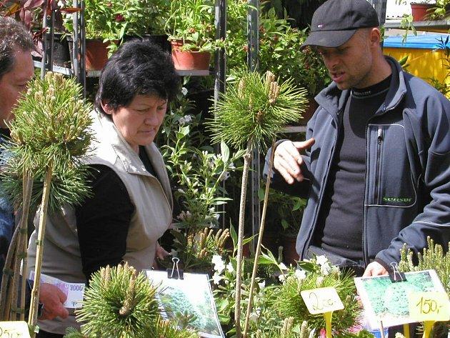 PLNO ZELENĚ. Jako každoročně i letos návštěvníci věžecké výstavy obléhají především stánky s rozmanitými rostlinami