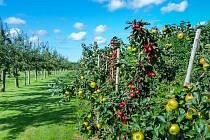 V rámci protierozních opatření vznikne nad Těšnovicemi ovocný sad.