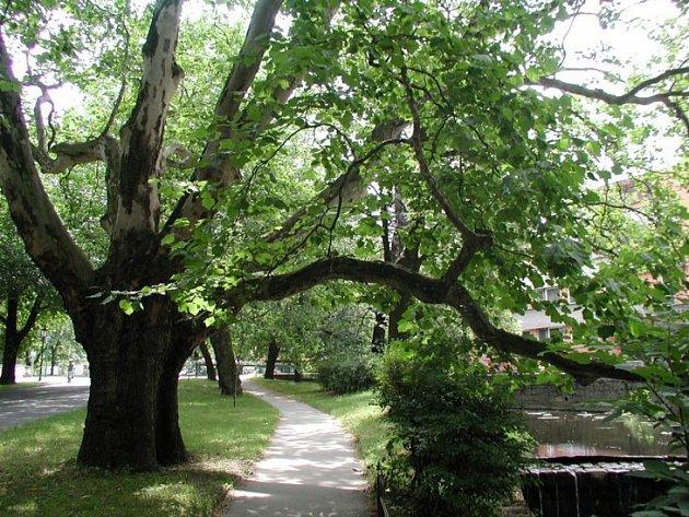 Celkem 62 stromořadí se utká v anketě Alej roku, kterou pořádá spolek Arnika. Dva zástupce má v letošním ročníku i Zlínský kraj, jedním z nich je pak platanová alej v centru Bystřici pod Hostýnem založená už v polovině 19. století.