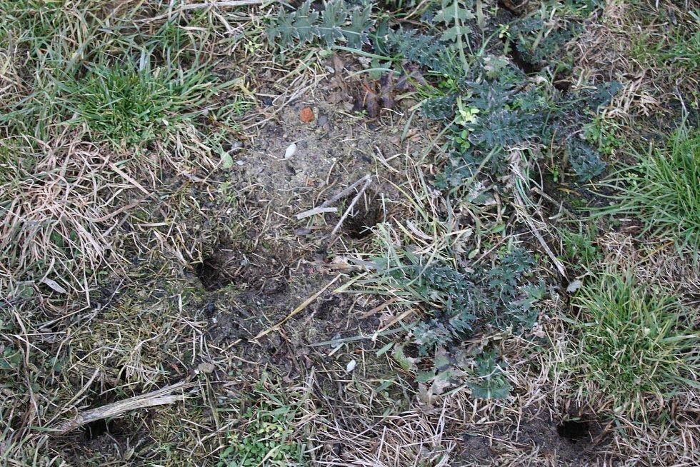 Hraboši se škodí na polích na Rokycansku i severu Plzeňska. Ilustrační foto.