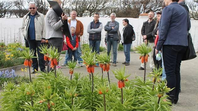 V Květné zahradě už rozkvétá na dvacet tisíc cibulovin. Zájemci mají možnost si zahradu prohlédnout i s odborným výkladem.