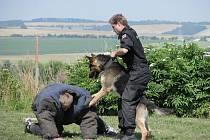 Policejní psi na cvičišti před dětmi