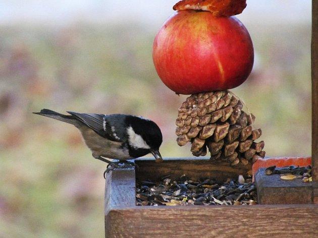 """Se začátkem jara tradičně nastávají hody i pro milovníky přírody – třeba zpěvných i ostatních ptáků. Nejčastějšími návštěvníky krmítek jsou podle odborníků sýkora koňadra a modřinka, zvonek zelený, vrabec domácí, vrabec polní a kos černý. """"Ojediněle se na"""