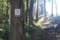 Stromy na turistické trase Podhradní Lhota - Tesák mohou být nebezpečné.