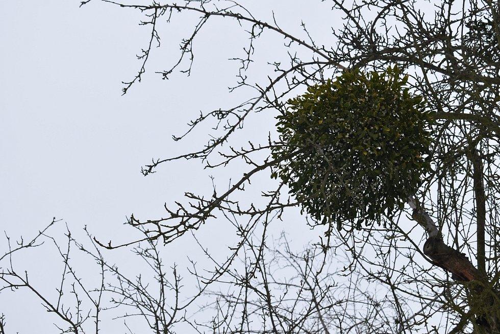 Ovocný sad, který by měl v Holešově projít velkou obnovou.
